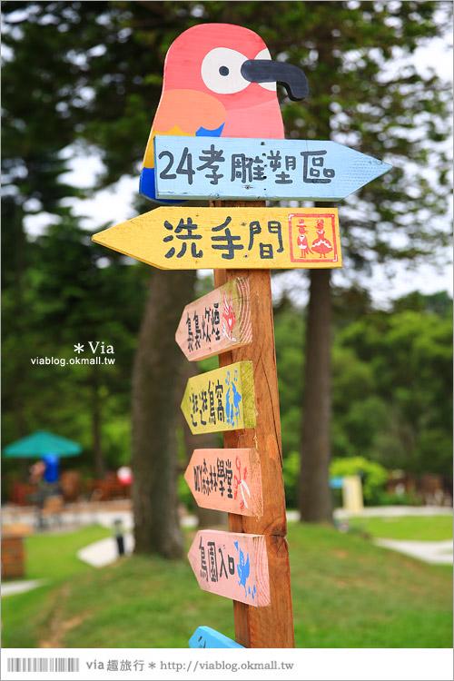 【新竹景點推薦】森林鳥花園~親子旅遊的好去處!在森林裡鳥兒與孩子們的樂園11