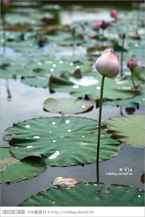【彰化大村景點】大村雙心池塘/平和夕照平台@浪漫必遊‧約會拍照的好去處~16
