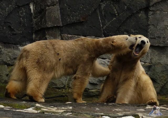 Tierpark Berlin 07.02.2015   232