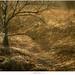 De Groote Peel by nandOOnline
