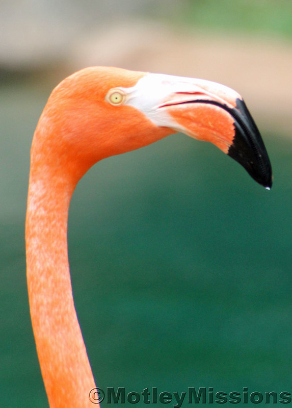 flamingo head