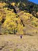 P Walking in Autumn Colour