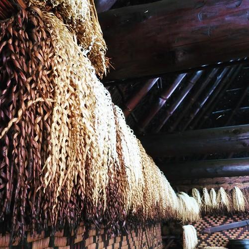 酒蔵だったら、つくった酒の回数をカウントしたり、あるいは参加した祭りの数だったり。こうして、増やしてく。古いものは、囲炉裏の煤で変色してくる。 #アイヌ民族博物館 #ポロトコタン