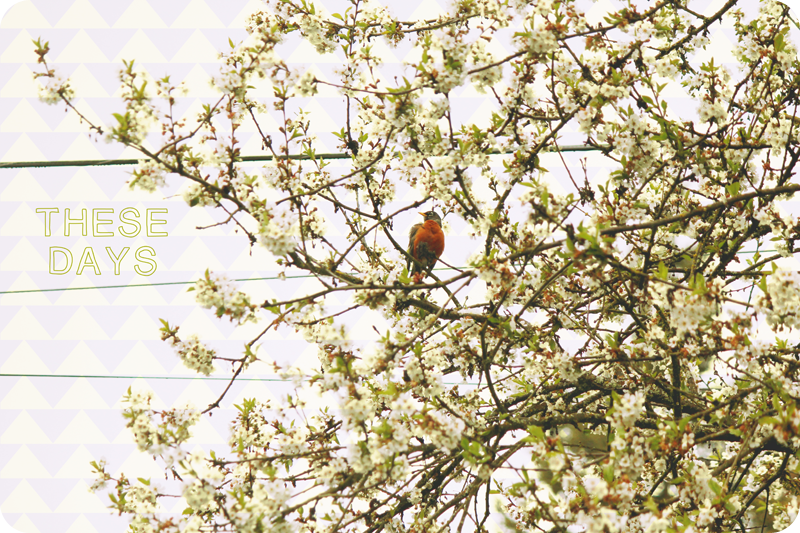 {april} these days | robin