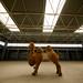 Stuffed Camel by oeyvind