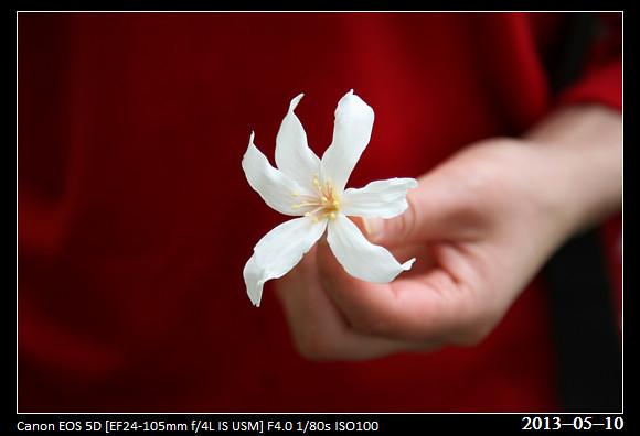 20130510_Flower2
