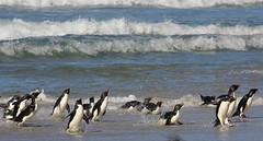Antarctic Wildlife 2012-13