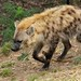 oak_zoo_may162013_ 43