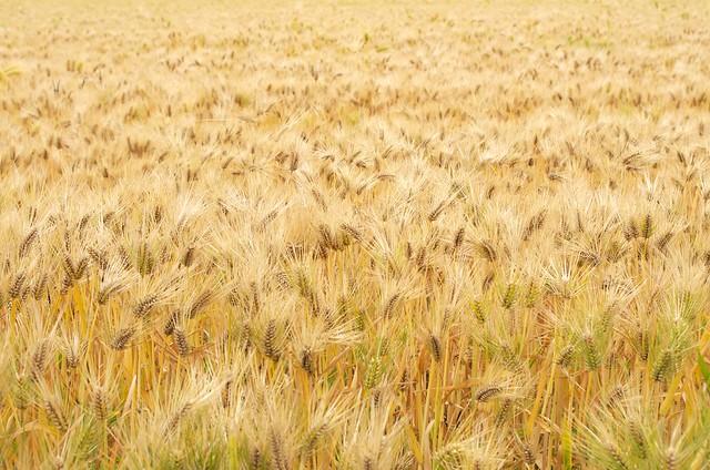 収穫は多いが働き手が少ない
