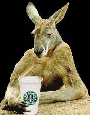 kangaroo-starbucks