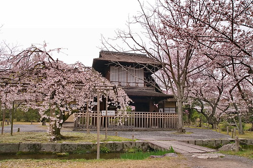 【写真】桜 : 渉成園