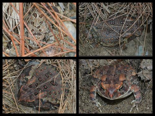 flip toads
