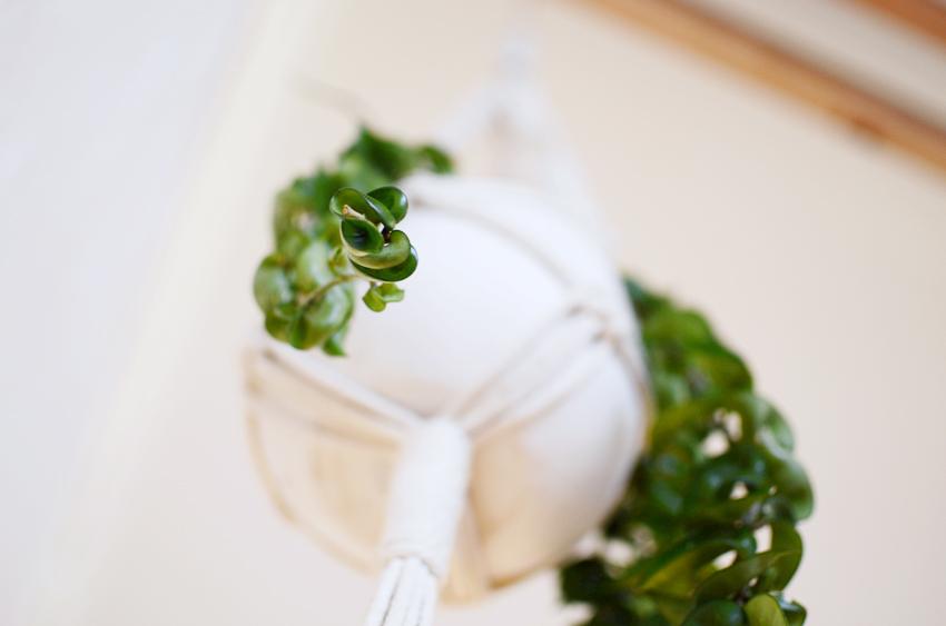 hangy plant