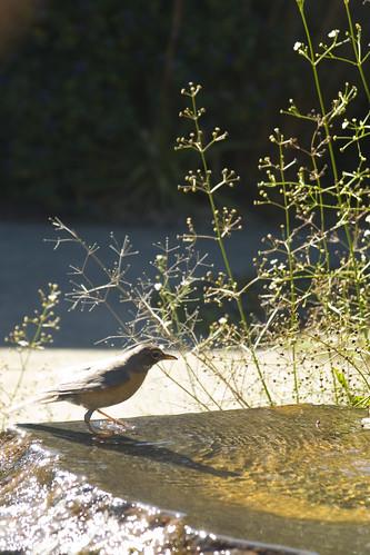 SFBG bird