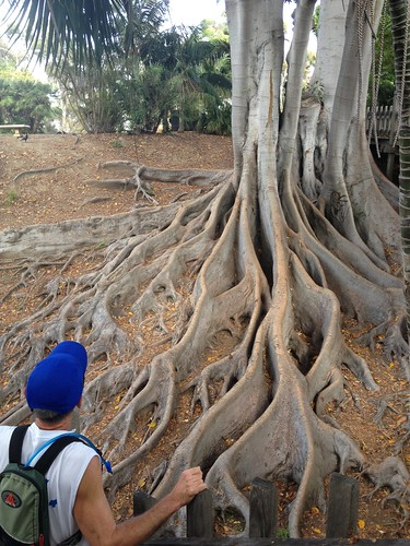 Seen on our run: grand old tree with impressive roots, Balboa Park