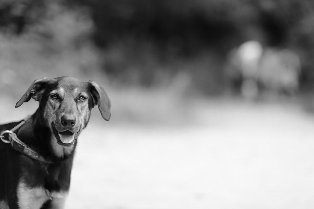 27 - Aug - 2013 - Dog Day