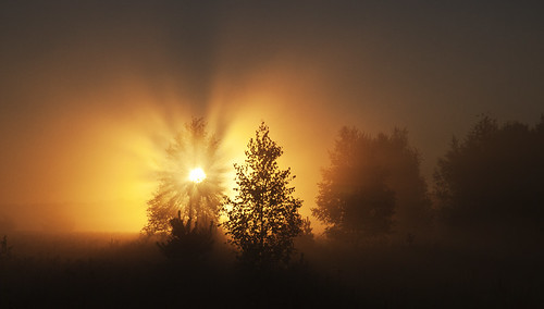 morning sun mist fog forest sunrise lithuania lietuva bestcapturesaoi elitegalleryaoi