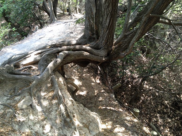 20130526六甲山歩Course4鉢伏山~須磨アルプス 028
