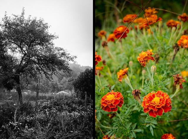 garden diptych1