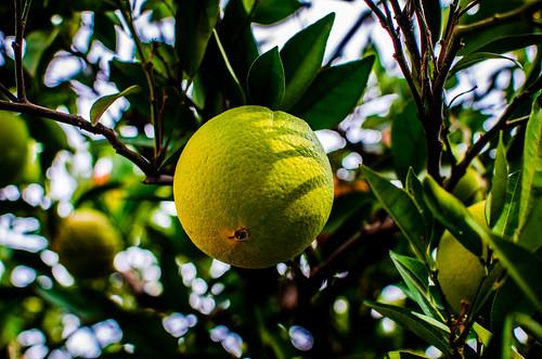 Naranjas 7