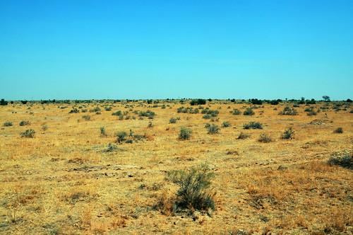 India - Rajasthan - Thar Desert - 45
