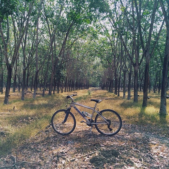 Biking in the rubber estate / C3 / #vscocam