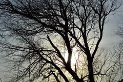 Tree Bones #4