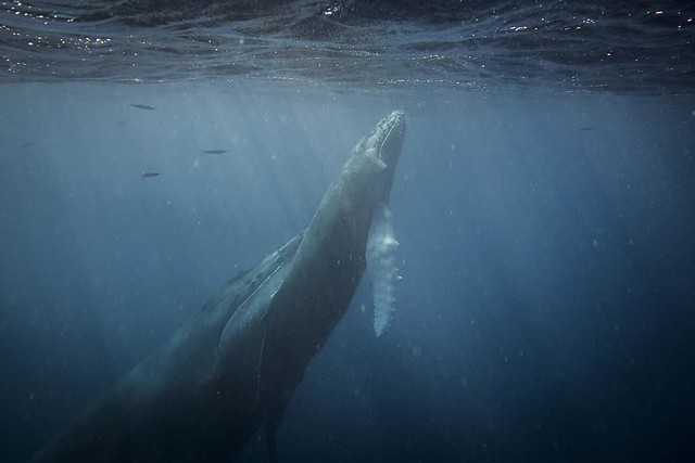 Mother & Daughter Humpback
