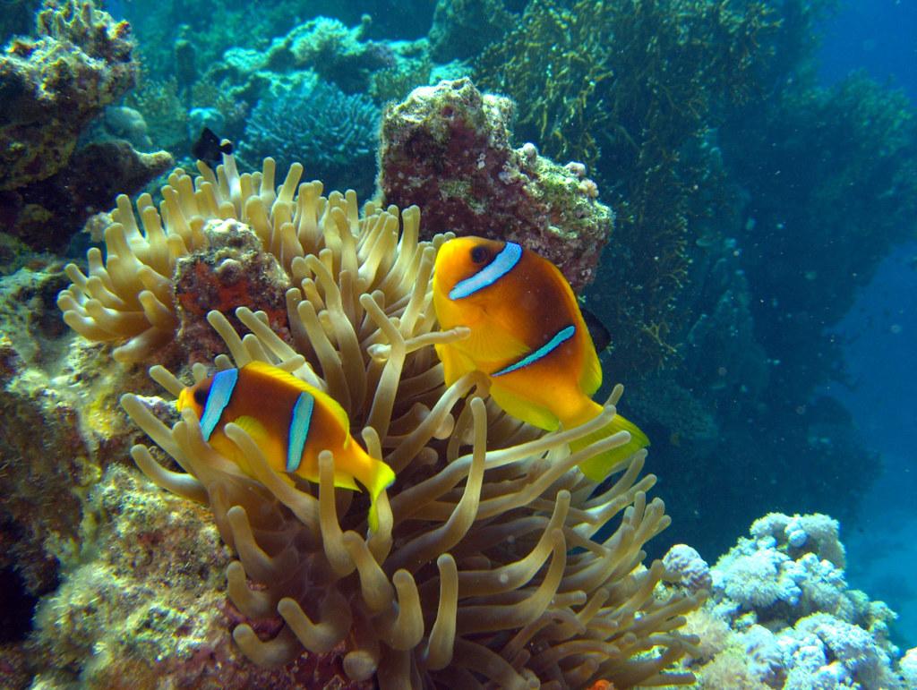Fisk i havet dating site