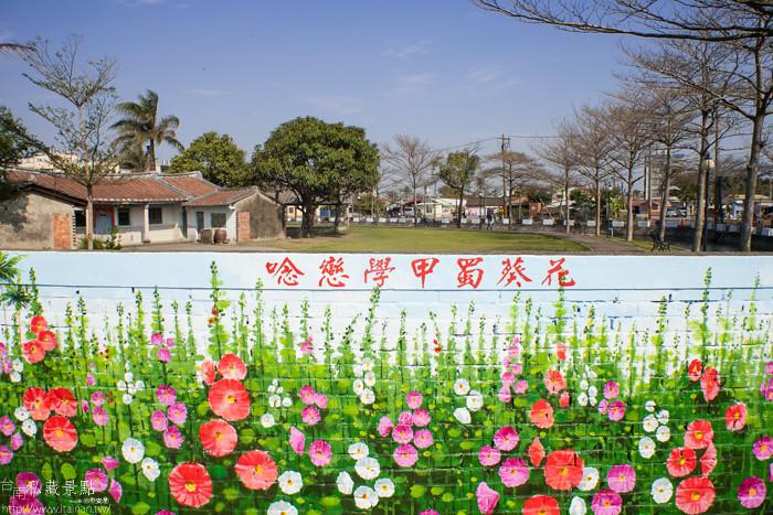 台南私藏景點--學甲蜀葵 (1)