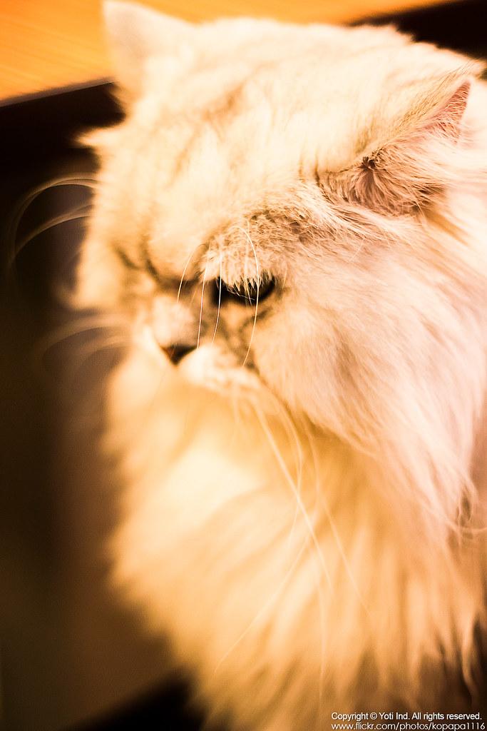 元氣貓主題餐廳 IMG_6048