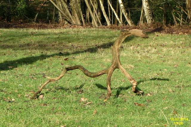 Small photo of oddly emaciated animal wgp