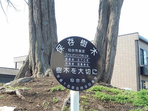 羽黒神社エドヒガンザクラ