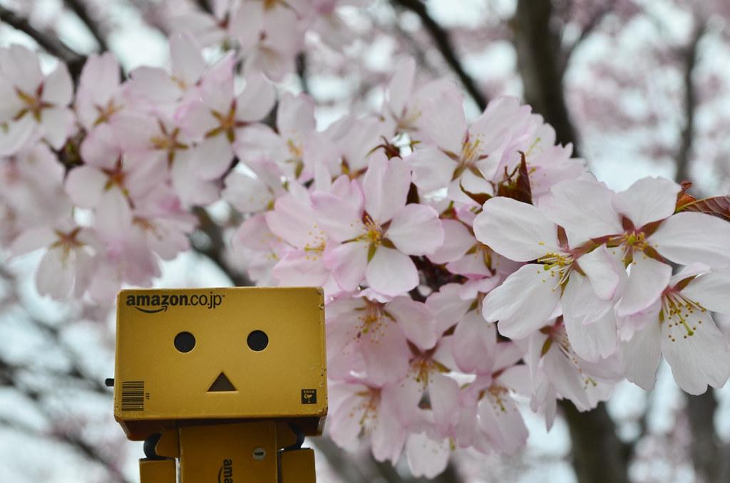 お花見ダンボー。 (4)