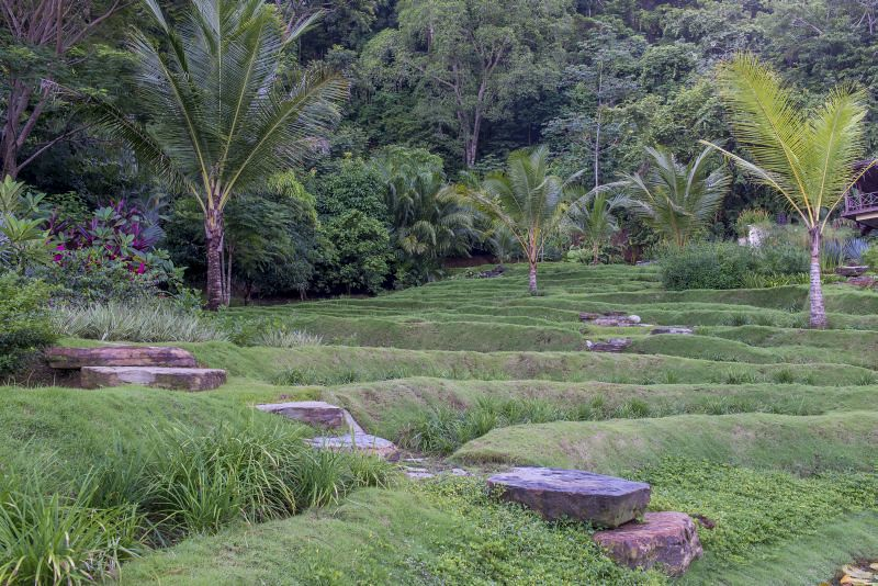 """Rice"" terraces planted with coconut palms"