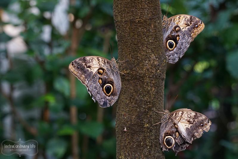 butterflies-11-wm
