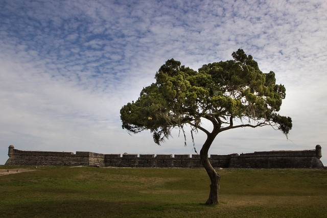 Tree Near the Castillo