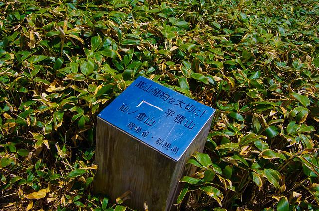 20150607-仙ノ倉山S-0102.jpg