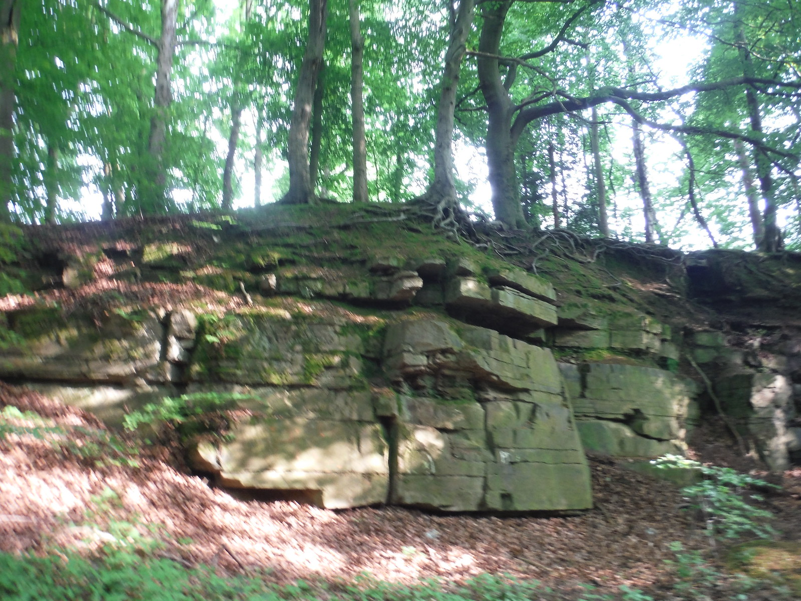 Stones in Cobnar Wood SWC Walk 267 - Sheffield Circular (via Porter, Limb, Sheaf and Gleadless Valleys)