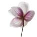 Yesterdays Anemone hupehensis by Funchye