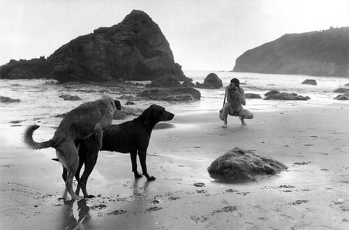 Jill Freedman, Dancing Dogs, California, 1968