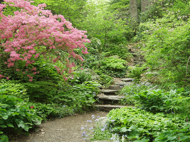 garden in the woods framingham credit lisa mattei flickr photo sharing