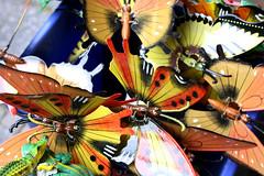 Butterflies / Schmetterlinge