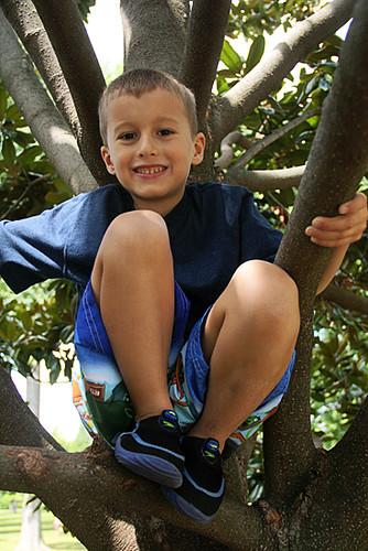 Nat-in-Tree