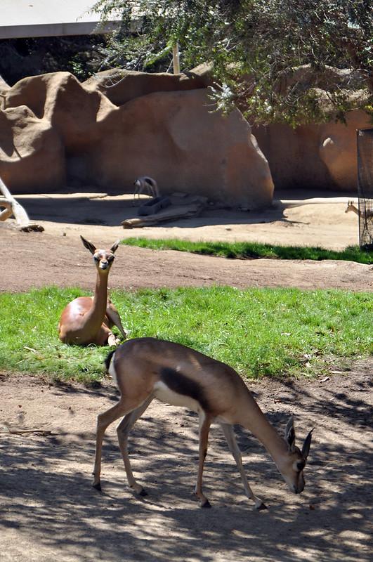San Diego Zoo #14