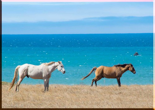 CoastalHorsies