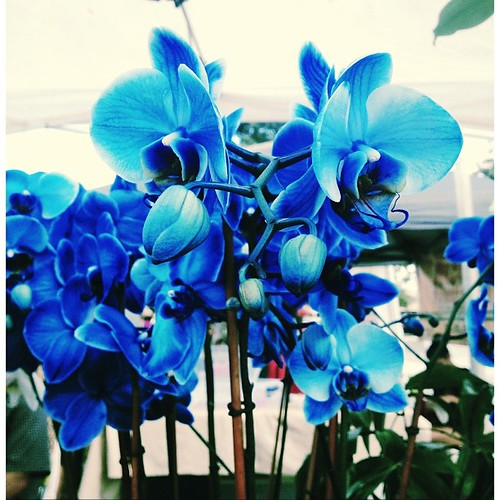 Pretty #blue #orchids at the Coral Springs Green Market #pictapgo_app