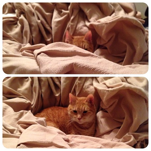 272:365 Found the kitty hiding spot (in the clean laundry of course) #catsofinstagram