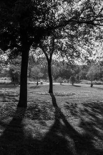 park morning trees blackandwhite bw sunrise early shadows meetup highcontrast backlit 2013