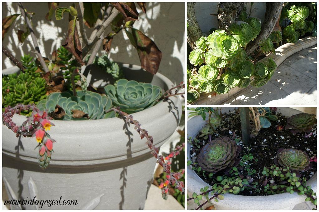 Succulent Garden 7